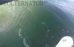 Colternator Surfboard